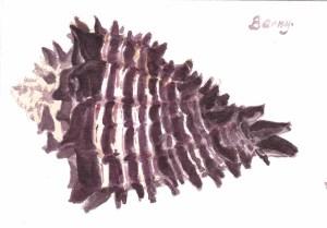 found in Calif. coast; size: 10 cm to 15 cm