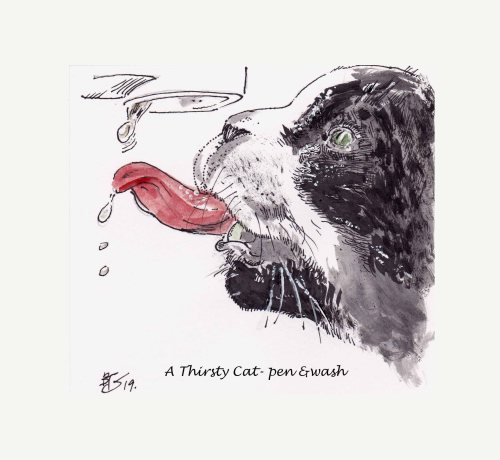 A Thirsty Cat-pen and wash