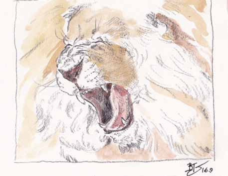 A Yawning Lion- sketch