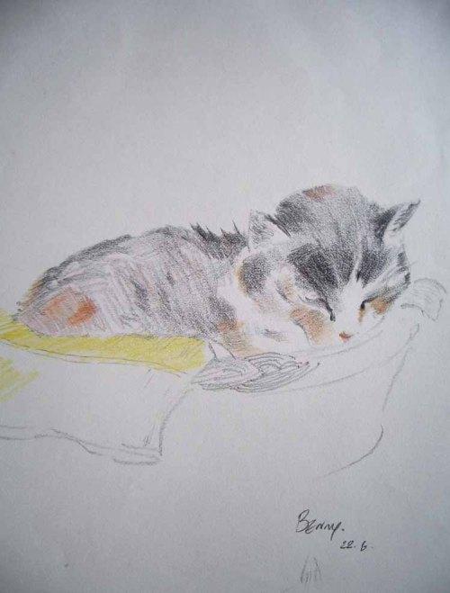 cat-sketch