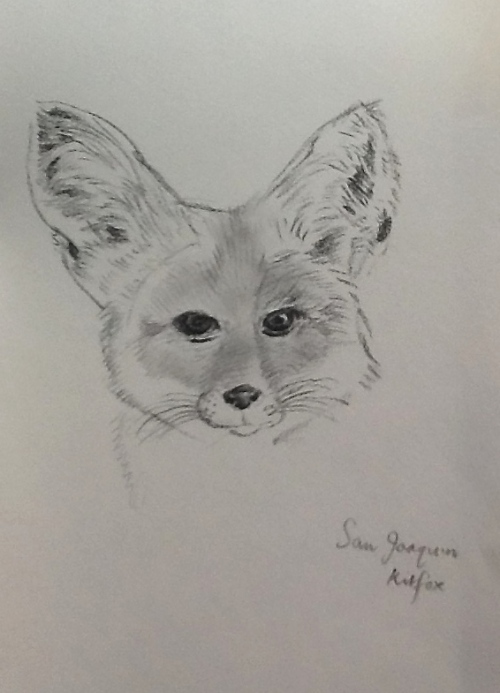 Head of a Fox