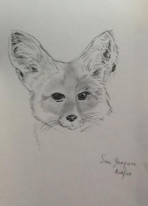 Head of a Fox