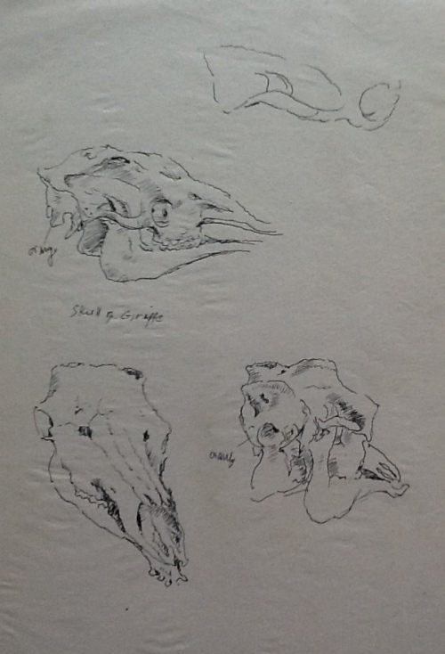 From my sketchbook-Skulls