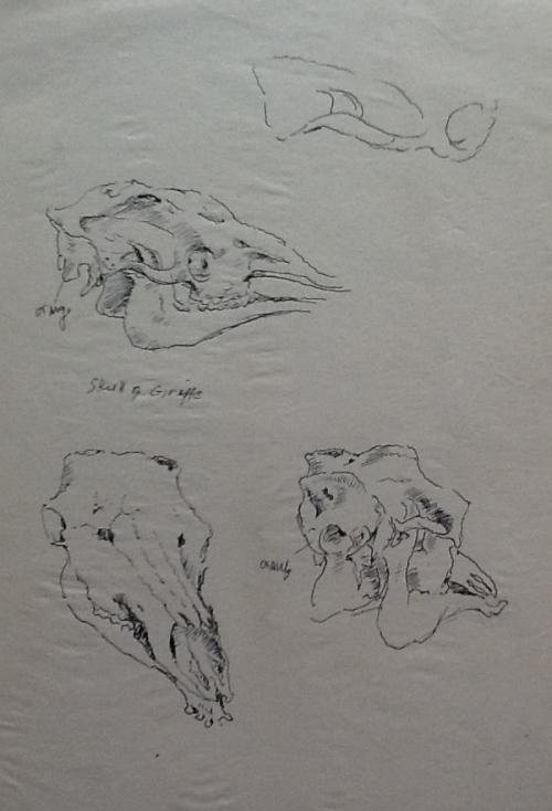 From my sketchbook-Skulls