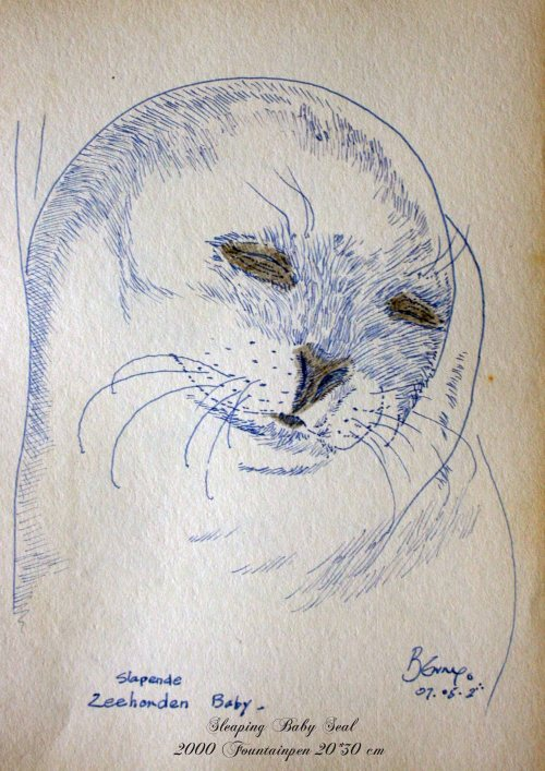 Sleeping Baby Seal-pen