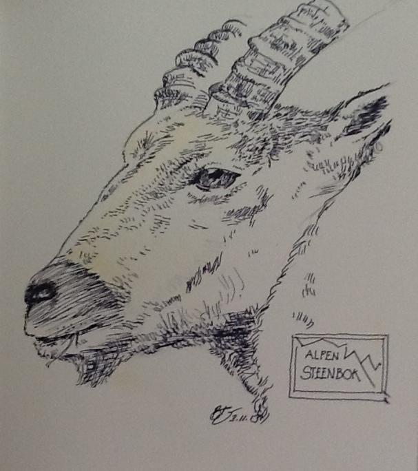 Mountain Goat Alpine Steenbok Pen Drawing
